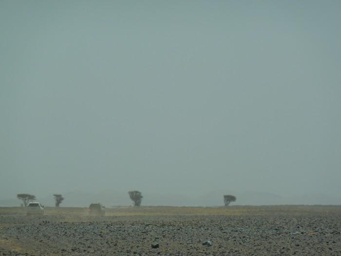 Marruecos. Árboles al fondo.