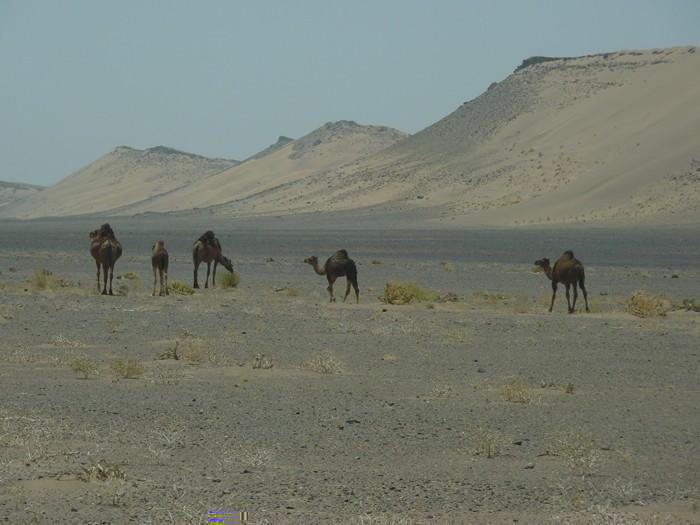 Parada técnica. Camellos a la derecha.