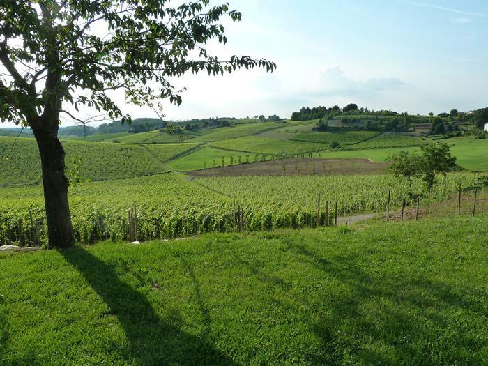 La Toscana. Paisaje desde Villa Sparina