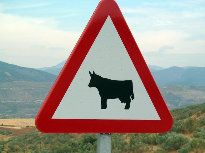 Una vaca en la señal, avisa de la presencia de animales sueltos