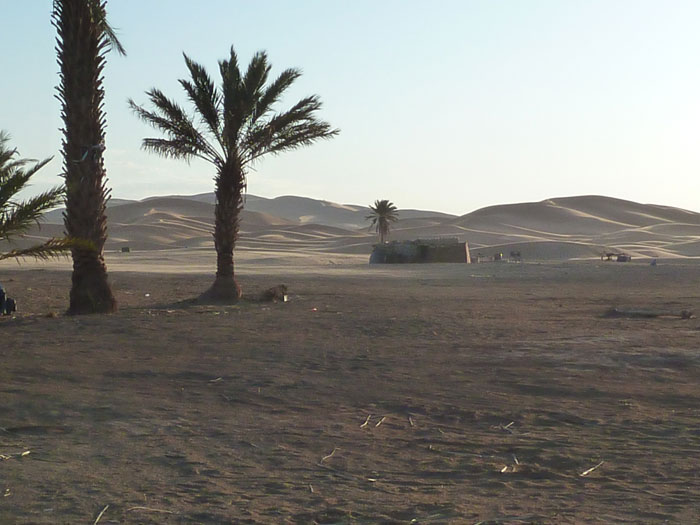 Marruecos. Desierto. Palmera