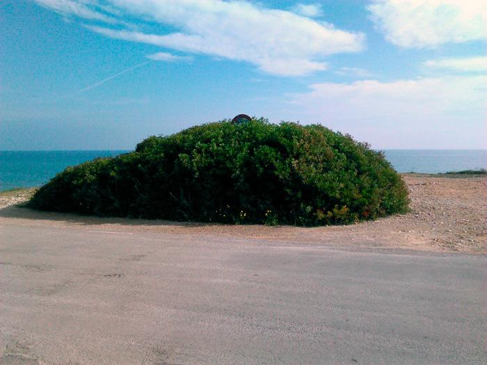 Una carretera de orden secundario a la orilla del Mediterráneo: entre una espesa y solitaria zona de matorral, asoma una señal de tráfico.