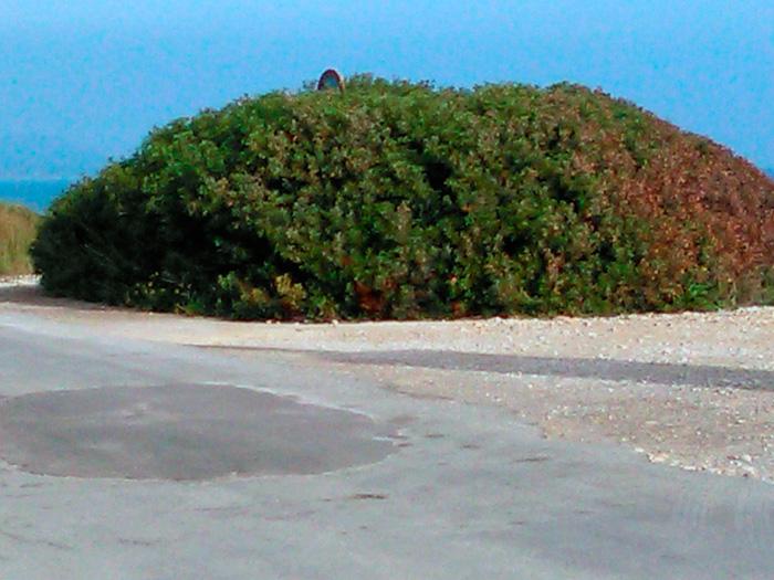 El perfectamente delimitado matorral parece gozar de mucha mejor salud que la conservación del firme de la carretera y su cuneta.