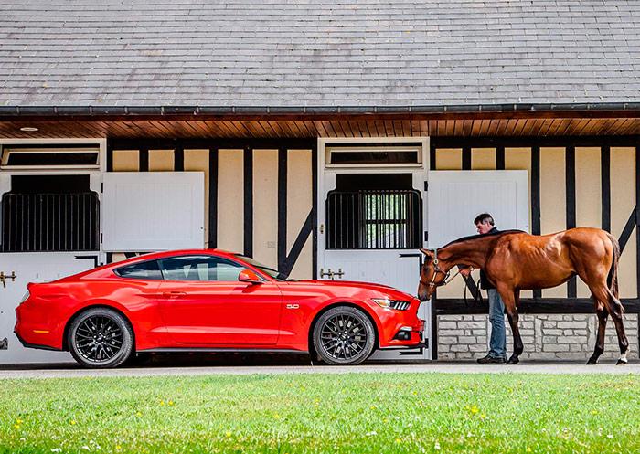 Dos caballos frente a frente: el bronco Mustang y el refinado purasangre europeo, que no las tiene todas consigo y olisquea con mucha precaución a su primo del otro lado del Atlántico.