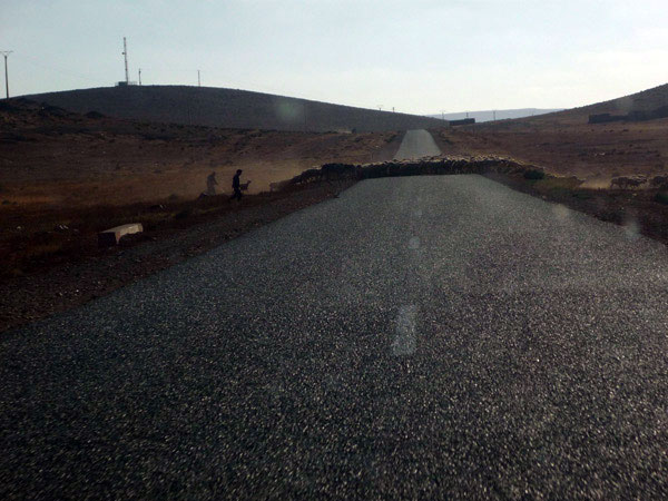Marruecos. Rebaño de ovejas. Camino de Tan Tan.