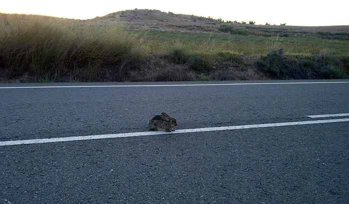 El conejo y la suicida