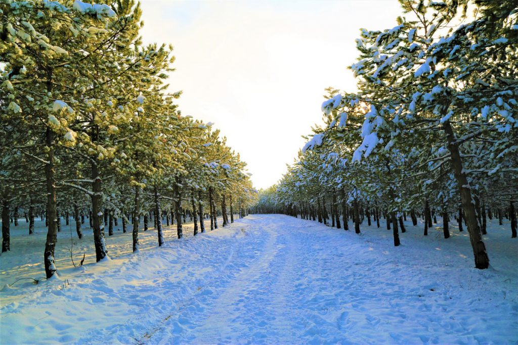 Carretera nevada transitable