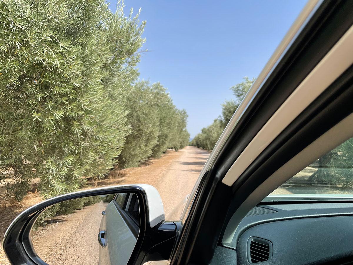 Navegar olivos