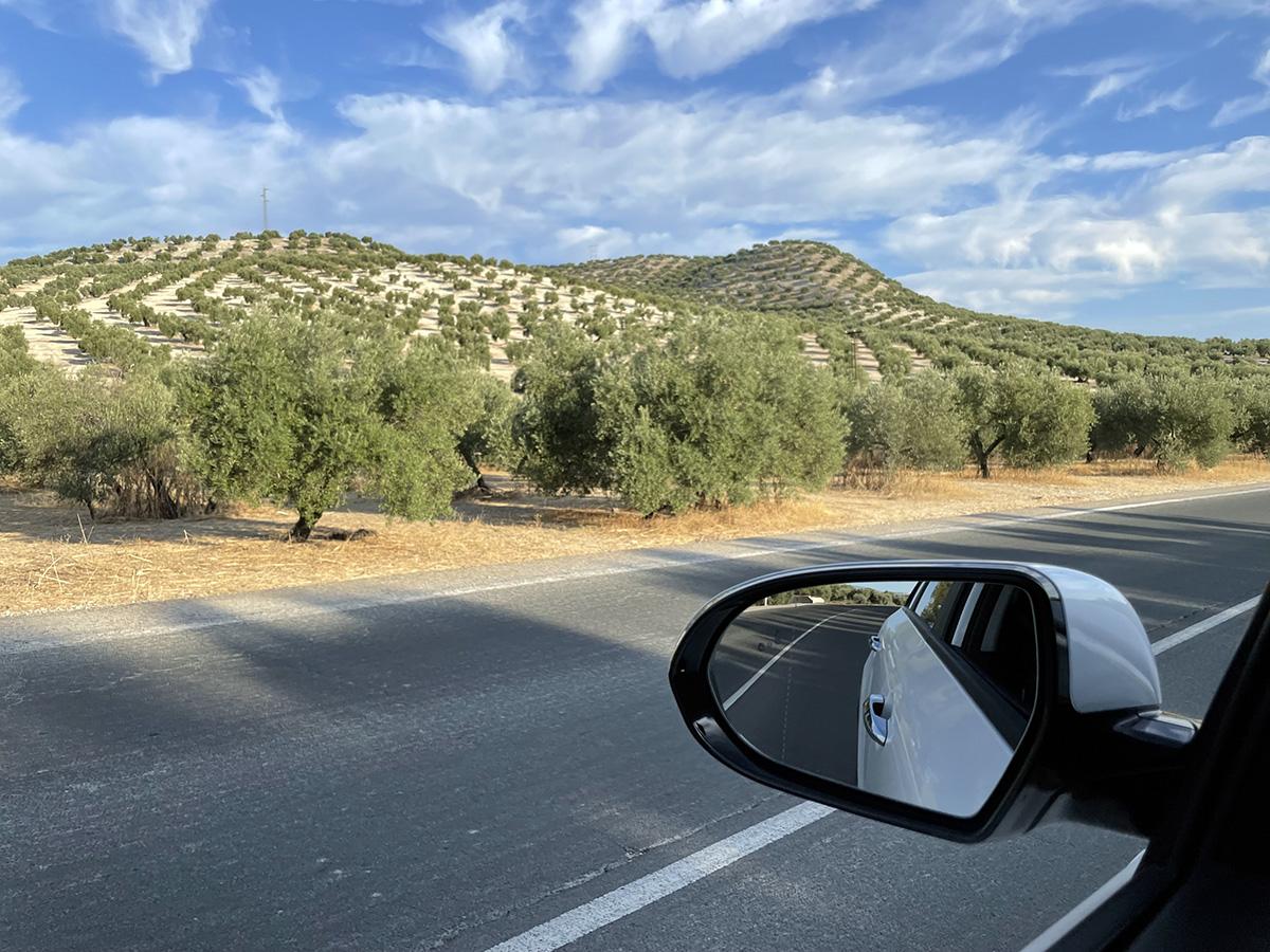 Campos de olivos entre Jaén y Andújar