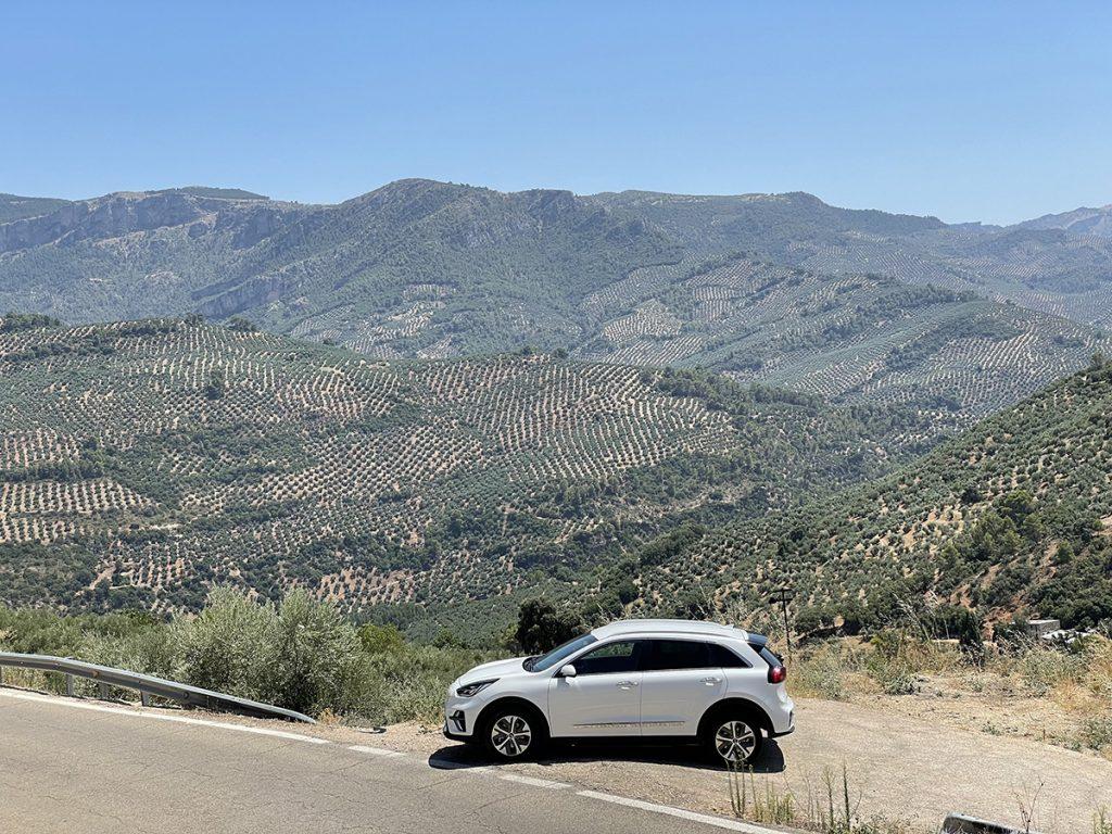 Jaén. Paisaje mixto de olivos y bosque